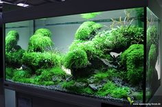 The Art of the Planted Aquarium 2013 - Aquascape: © Adrie Baumann. Foto: http://www.aquascaping-forum.de