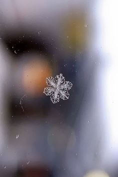"""who blames others for the things he hates about himself"""" I Love Snow, I Love Winter, Winter Wonder, Winter White, Snowflake Photography, Nature Photography, Snowflake Photos, Crystal Snowflakes, Ice Crystals"""