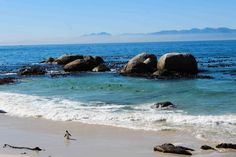 waddle like a penguin, Boulders beach, Cape Town Boulder Beach, Sober, Cape Town, Bouldering, Penguins, To Go, Outdoor, Outdoors, Penguin