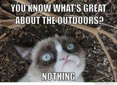 Grumpy cat hates the outdoors