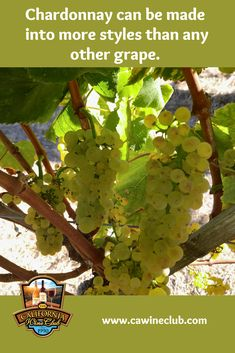 What if I don't like Chardonnay? - The California Wine Club Wine Tasting Course, California Wine Club, Wine Making Process, Wine Safari, Wine Country Gift Baskets, Barolo Wine, Virginia Wineries, Wine Education, Wine Sale