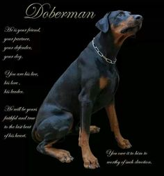 Dobes..and other dogs