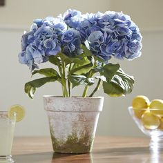 Potted Faux Blue Hydrangea | Perennially elegant, this lifelike, potted hydrangea features three blooming stems and is hand-finished for lasting beauty. Distressed detailing on the clay container lends itself to a timeworn feel.