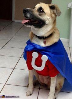 DIY Underdog Dog Costume - petdiys.com