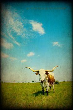 Fine Art Photograph Western Photography Texas Photography Southwestern Home Decor Art. $25.00, via Etsy.