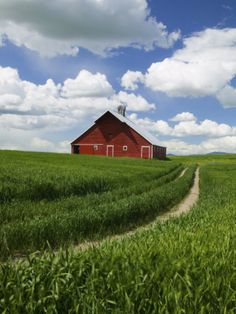 Old Red Barn and Spring Crop of Wheat, Genesee, Idaho, USA
