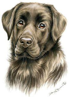 Irina Garmashova-Cawton - Artiste Peintre Animalier - Spécialiste des Peintures et Portraits Félins - Couleurs - Chien Labrador Chocolat