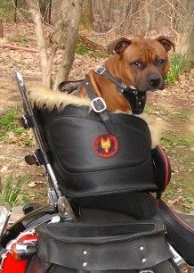 Beast Rider! Leather riding dog seat system, goggles, and shearling coats & quilts!