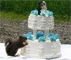 Funny Animal Pictures - View our collection of cute and funny pet videos and pics. New funny animal pictures and videos submitted daily. Funny Wedding Cakes, Unique Wedding Cakes, Wedding Ideas, Wedding Fail, Dream Wedding, Wedding Desserts, Wedding Humor, Wedding Things, Wedding Pictures
