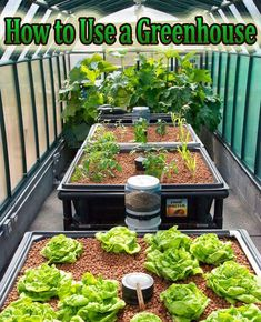 Hydroponic Gardening Ideas How to Use a Greenhouse. Learn about the basics of running a greenhouse, and decide if you want to try one for yourself. Aquaponics System, Hydroponic Farming, Hydroponic Growing, Greenhouse Growing, Small Greenhouse, Greenhouse Plans, Greenhouse Gardening, Growing Plants, Hydroponics
