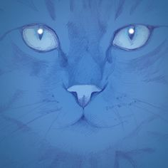 cats illustration  - 2013