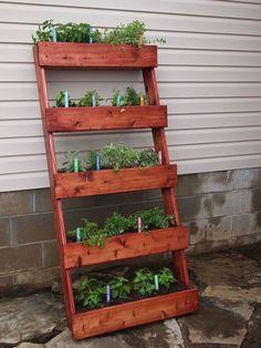 Cactus Plant Pots, Potted Plants, Diy Planters, Hanging Planters, Vertical Garden Diy, Vertical Gardens, Diy Box, Balcony Garden, Clever Diy