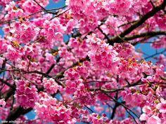 Primavera - Il mio sogno Celeste