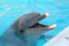 I would love to swim with dolphins someday. They are also my favorite animal.