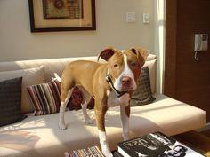 Isaboo - Rachael Ray's dog