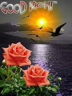 Moonlight and roses. New Good Night Images, Good Night I Love You, Beautiful Good Night Images, Good Night Friends, Good Night Wishes, Good Night Sweet Dreams, Good Night Angel, Good Night Prayer, Good Night Blessings