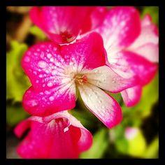 Meu jardim III