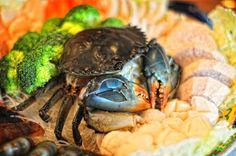 Shabu Shabu Shabu Shabu, Hot Pot, Turtle, Japan, Food, Turtles, Tortoise, Essen, Meals