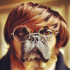Mr. French B. Ulldog