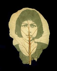 Binh Danh photography on leaves