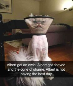 Funny Animal Pictures Cute Animal Memes, Funny Animal Quotes, Animal Jokes, Cute Funny Animals, Cute Baby Animals, Cute Cats, Adorable Kittens, Funny Quotes, Cat Quotes