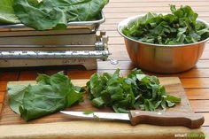 Rharbarber ist lecker! Was machst du aber mit den Blättern und den Wurzeln? Die sind viel zu schade für den Müll! Ich verrate dir, was du damit anstellst! The Dish, Lettuce, Home Remedies, Homesteading, Spinach, Spices, Home And Garden, Herbs, Healthy Recipes