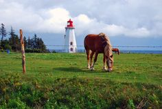 Panmure Island Lighthouse, Prince Edward Island. Insane. I went to this lighthouse when i visited PEI, and i took a picture of that same horse. Strange and wonderful:)