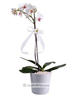 beyz orkide siparişi için http://www.cicekvitrini.com/cicekler/cicek-siparisi-ver