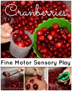 Cranberry Fine Motor Skills Play   Cranberry Sensory Play & Fine Motor Fridays Blog Hop Exploring, discovering, touching, learning, observing, practicing, scooping, tweezing, sticking, pinching, dumping, filling, pouring, & laughing! Getting Started It's a great time of year to find ...
