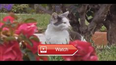 😸 Best Funny Cats Video Funny Cats Compilation 😼 Top Funny Cats funny cat videos A Funny catsFunny Cats Compilation best funny cats…