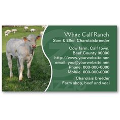 Charolais beef cattle business card. A photo of a calf standing in front of the rest of the herd. Price varies according to size, qty and card stock.