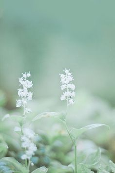 Come and live in my fantasy. Kyoko Sakura, Mint Green Aesthetic, Foto Art, Mint Color, Mint Blue, Blue Green, Soft Summer, Shades Of Green, Ethereal