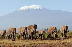 Google Image Result for http://img.ehowcdn.com/article-new/ehow/images/a04/sr/e9/travel-kenya-tanzania-800x800.jpg