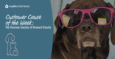 Customer Cause of the Week: The Humane Society of Broward County…