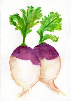 A couple of Colorful Turnips watercolor by SharonFosterArt on Etsy, $15.00