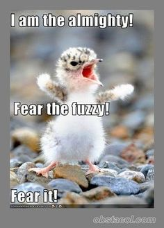 funny pictures of animals with funny sayings - Google Search # humor #lol # funny animals