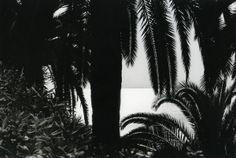 Jacques Henri Lartigue - Menton, 1978