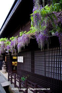Sanmachi Takayama ~ Gifu Japan by lilly Tenerife, Go To Japan, Gifu, Art Japonais, Japanese Architecture, Japanese House, Japanese Design, Japanese Culture, Wisteria