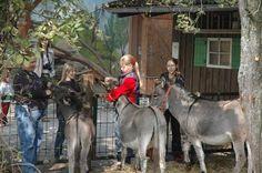 Haustierhof Reutemühle - Der Bodensee-Zoo | Ueberlingen am Bodensee Überlingen petting zoo