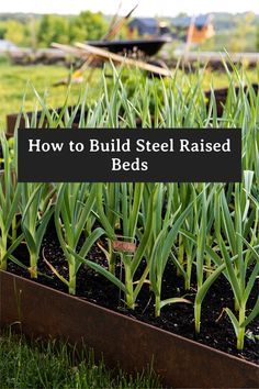 Easily Build Custom Raised Beds from steel using the information from this post. #longlasting #DIY #Raisedbeds #GardenIdeas #GardenTrends #gardendesign Homestead Gardens, Gardening For Beginners, Raised Beds, Permaculture, Vegetable Garden, Organic Gardening, Raising, Garden Design, Garden Ideas