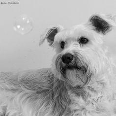 Carla Christiani - Pet - Fotografia Pet - Cães de pequeno porte