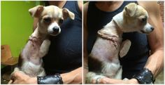Justice For Iris! 6-Month-Old Puppy Who Had His Foot Removed By A Monster For No Reason!   http://www.doghealth.ca