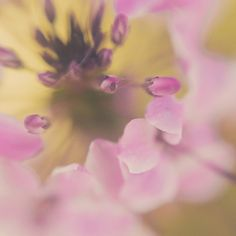 Pastel Macro Flower Photo 8x8 Print by TrinaBakerPhotos on Etsy $29.95 #TrinaBakerPhotography