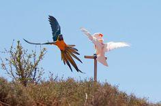 Bird Beauty.