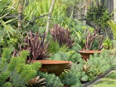 Fantastic foliage colour and texture combination, complementing the beautiful corten steel bowls. Design by Trish Bartleet, Auckland NZ. Pinned by Emily Preece Garden Design Garden Ideas Nz, Garden Inspiration, Garden Projects, Contemporary Garden Design, Landscape Design, Auckland, Cheap Plants, Coastal Gardens, Tropical Gardens