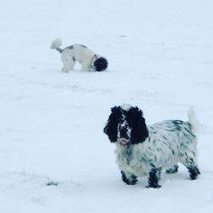 We've had lots of snow this week in Blakeney and across Norfolk