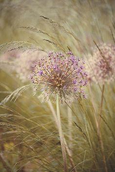 Finale by Jacky Parker Floral Art, via Flickr