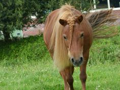 My Beautiful Mare   #MiniatureHorse #Horse #Red #Green #Pony
