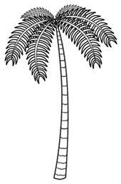 Cartoon palm tree drawing image