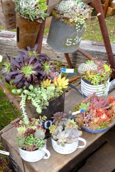 Plant succulents in any container 2